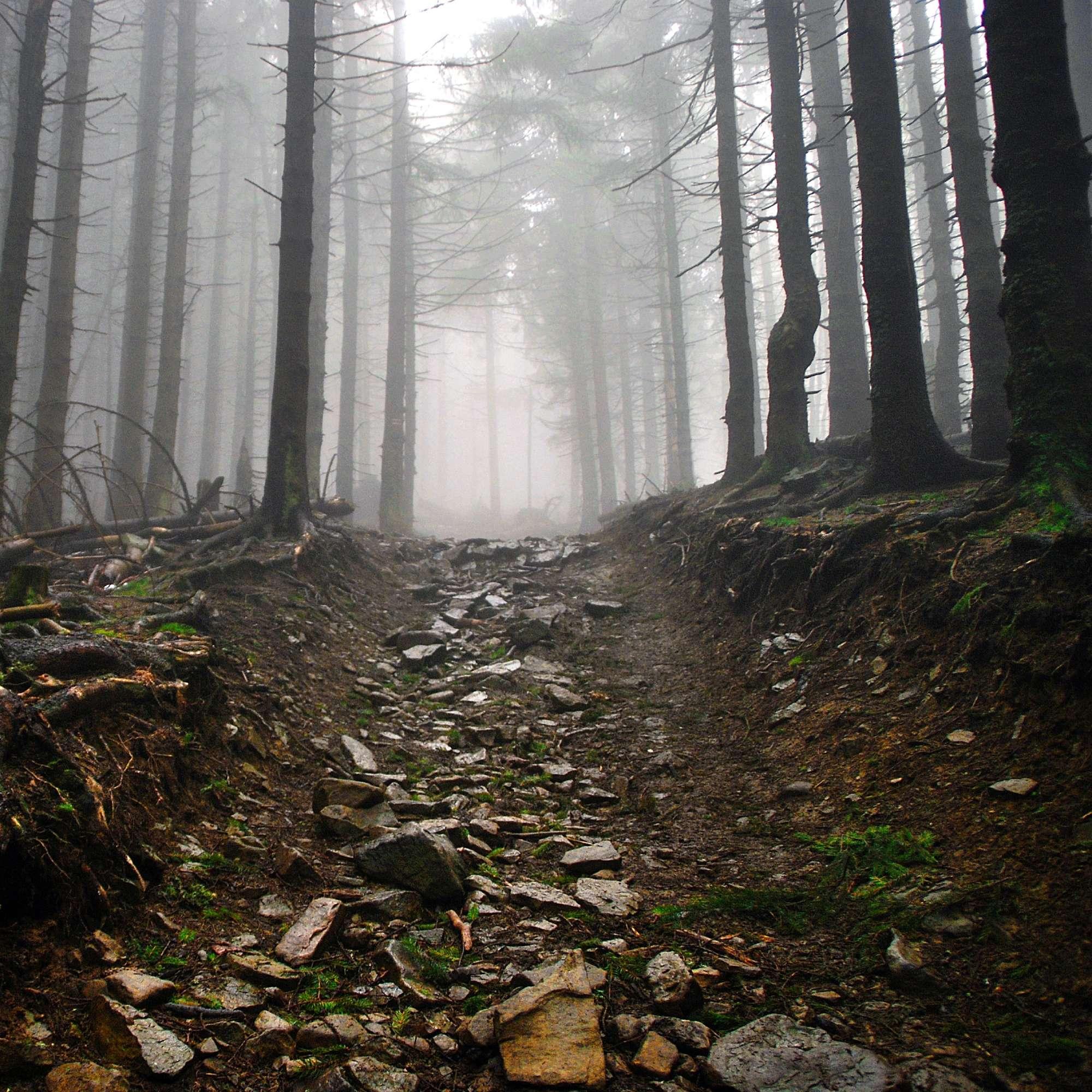 Der schmale Weg